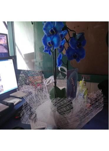 Orkide-13