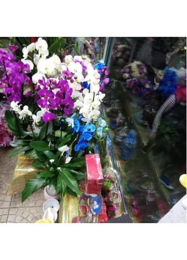 Orkide-1